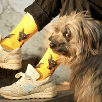 St. Fride Socks and PetShop.ru have released a collection of socks in support of stray animals